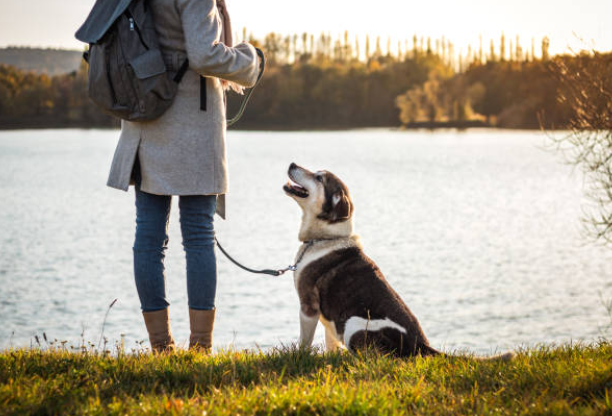 Pet Sitting vs. Dog Walking – What Exactly Is the Difference?